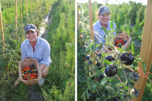 nicole picking tomatoes