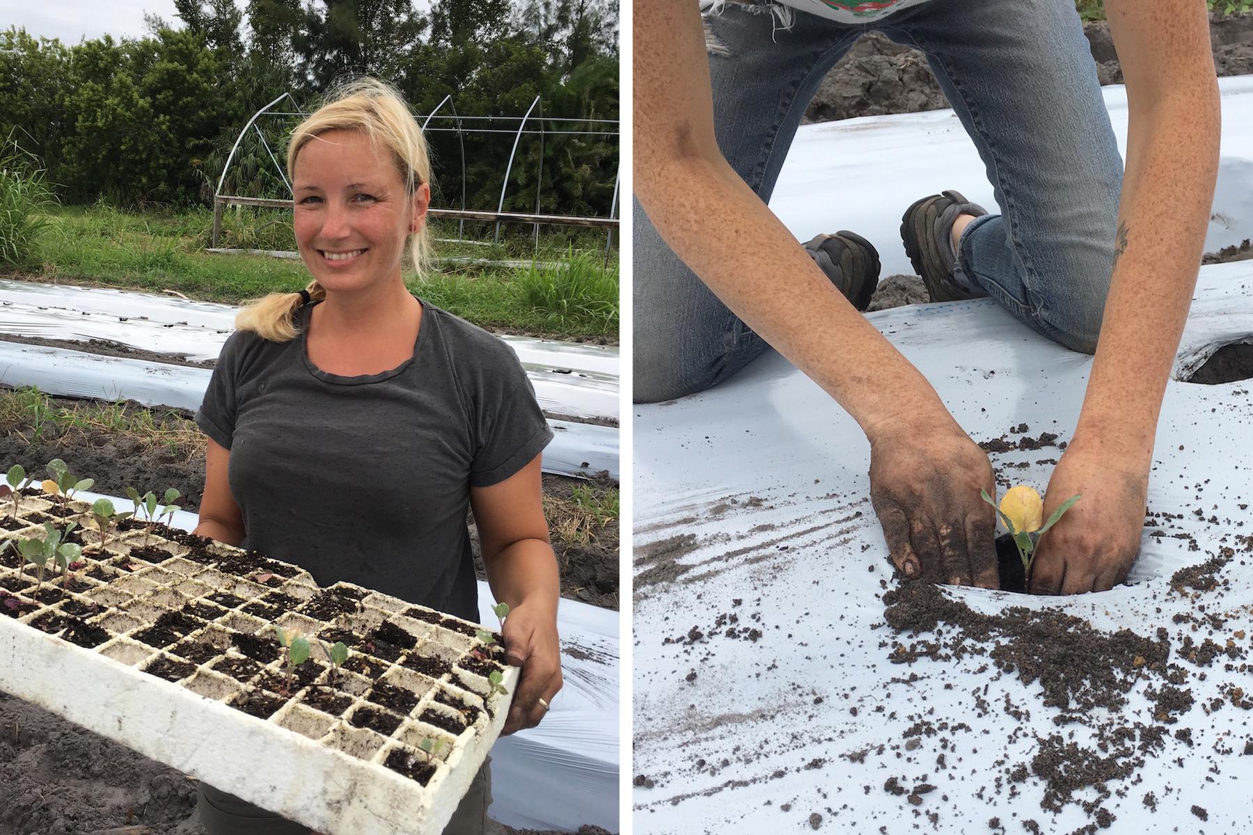 Geraldson Farm Planting
