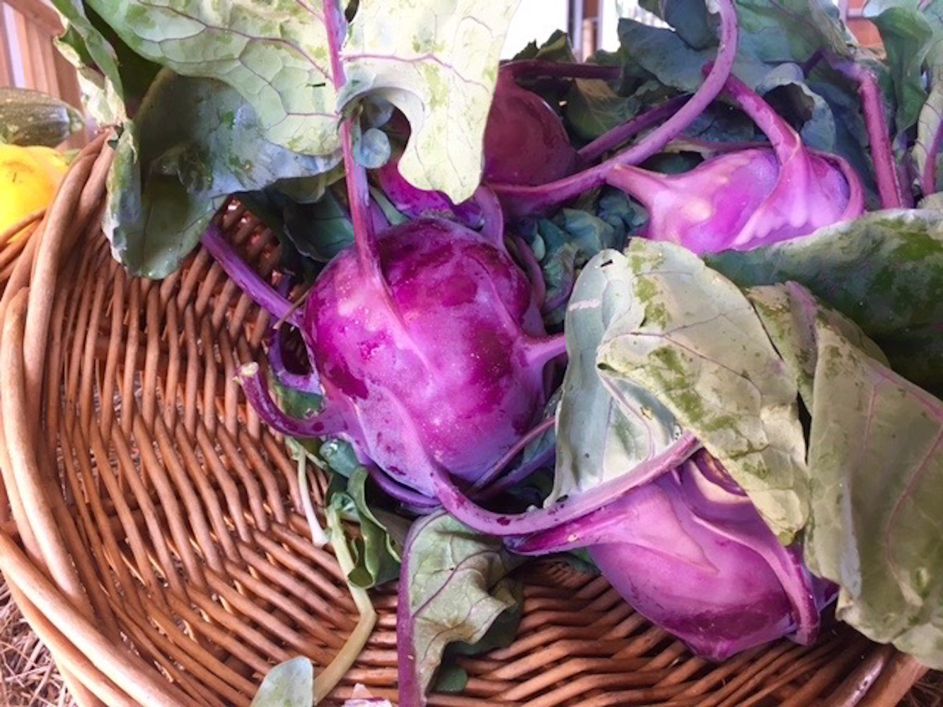 Purple Kohlrabi in Basket