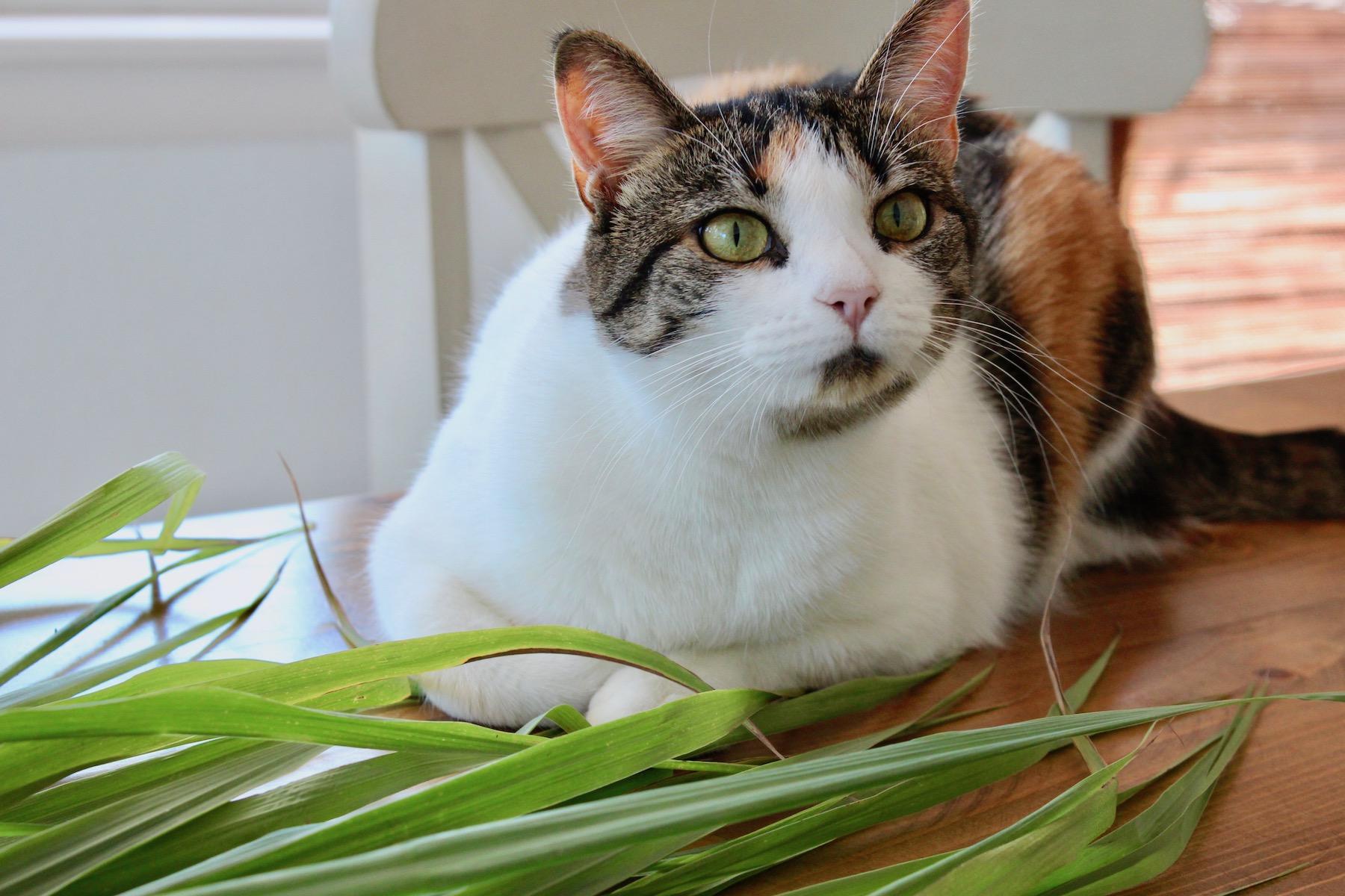 Lemongrass and Kitty