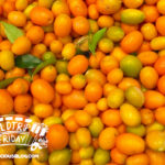 Kumquat Festival Cover