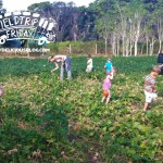 Gleaning at Jessica's Farm