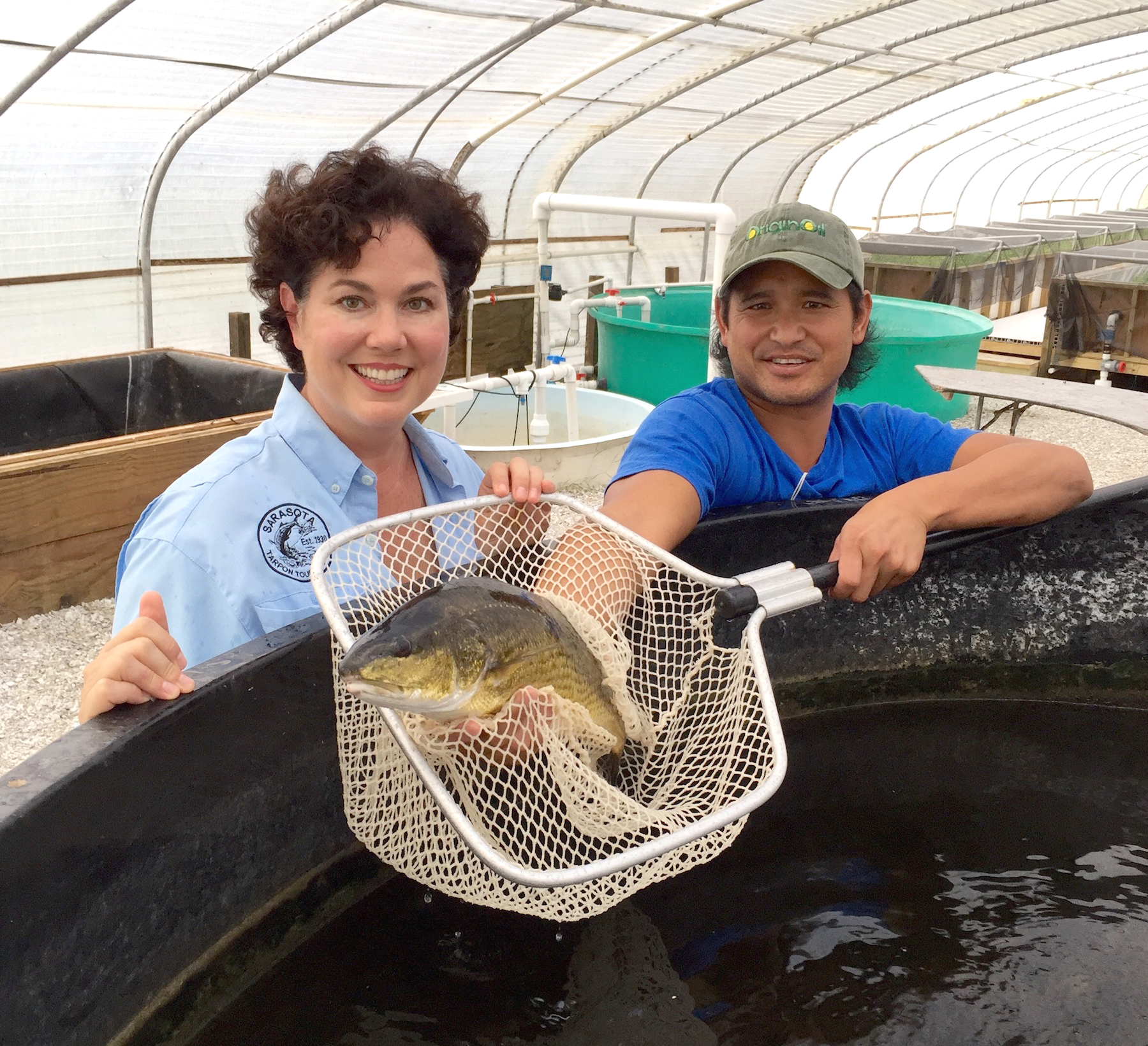 Mote Redfish farm raised