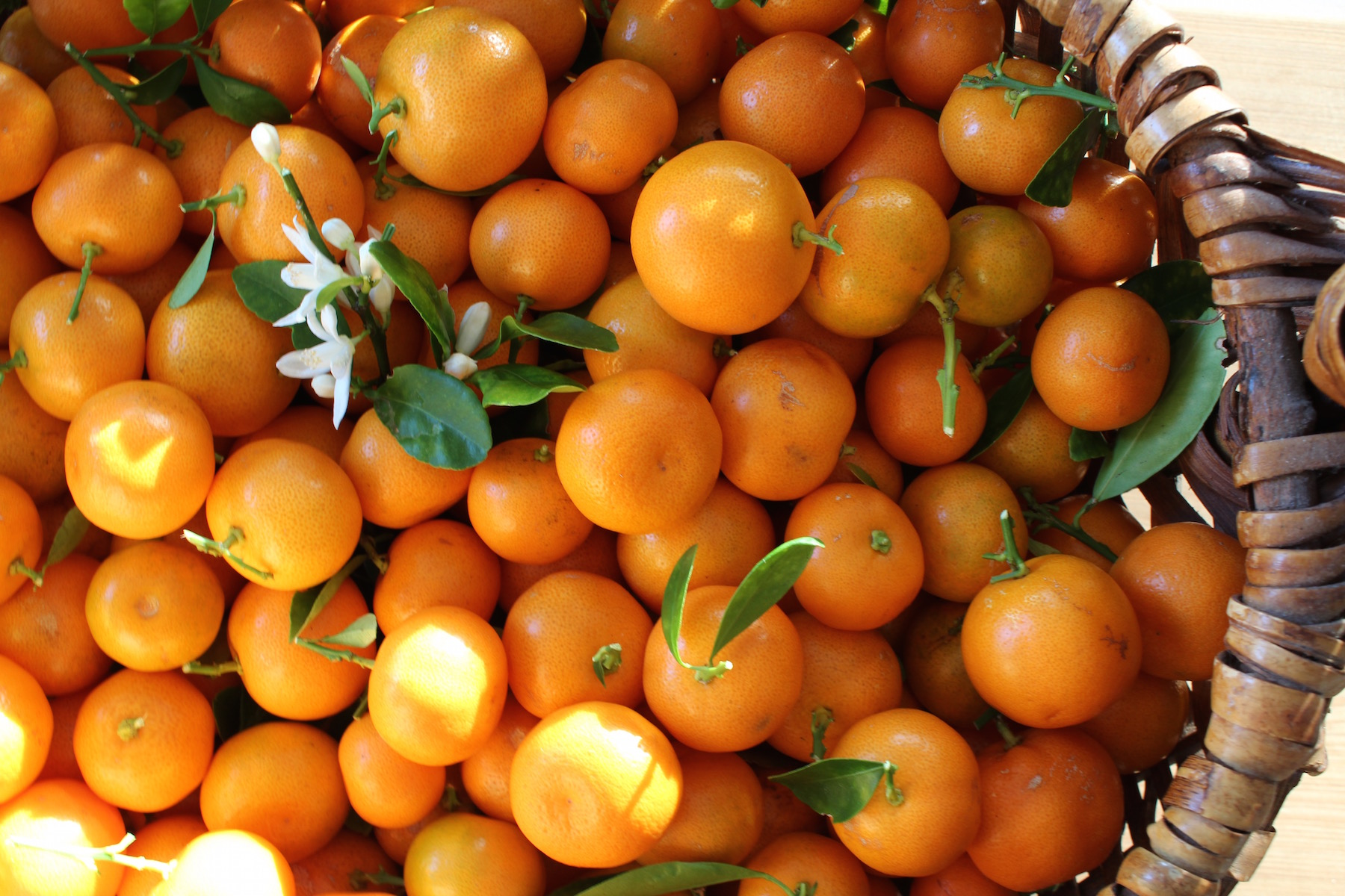 calamondins in basket