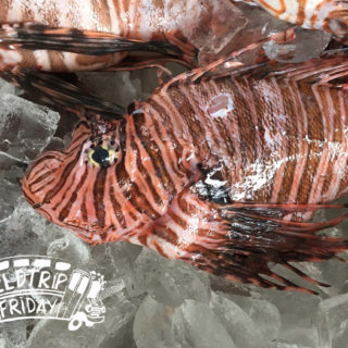 field trip friday_lionfish