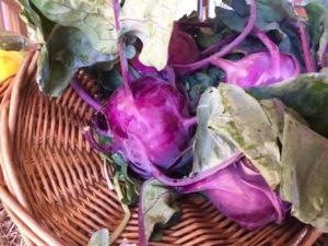 Purple Kohlrabi in Basket
