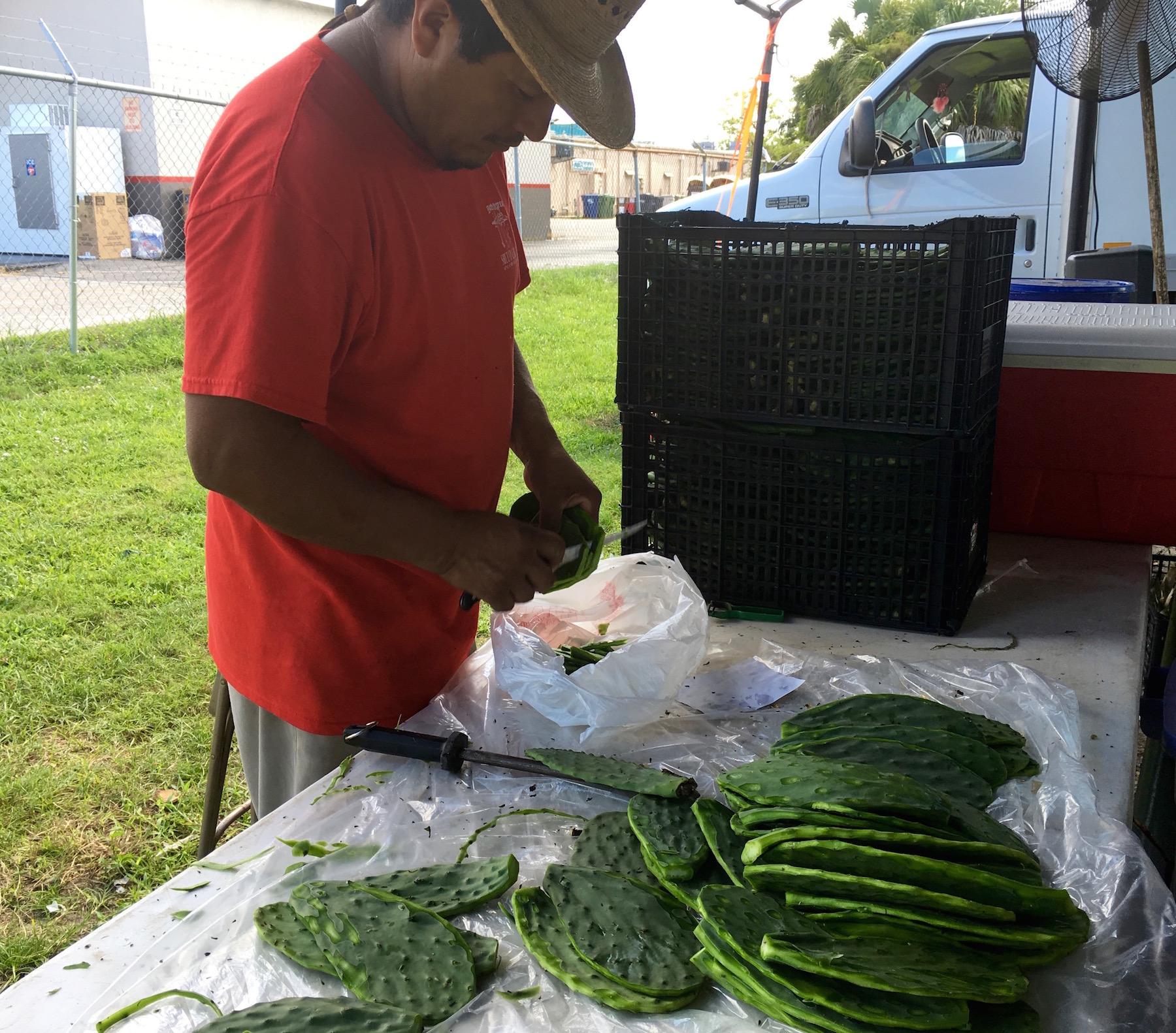 Prepping Cactus Paddles