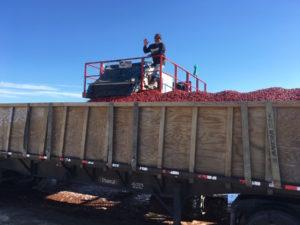 FTF - Berries in Truck
